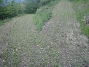 Террасы в Краметерхофе на ферме Зеппа Хольцера