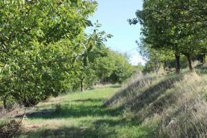 Террасы в Хольцерхофе на ферме Зеппа Хольцера